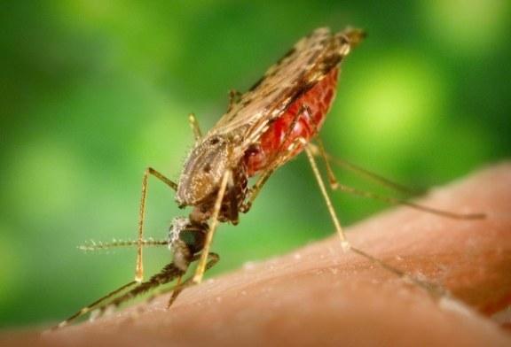 OMS alerta que são necessários mais recursos para combate à malária