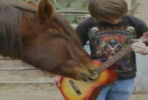 Cavalo toca violão e vira hit na internet