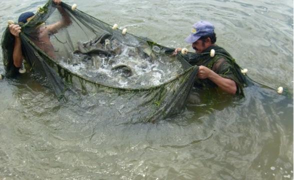 Governo vai investir R$ 4,1 bilhões na produção de pescado