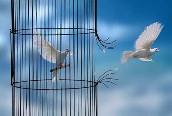 Não se trata de Restrição mas de Libertação