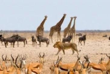 """Pesquisa revela que 90% dos animais surgiram """"ao mesmo tempo"""""""